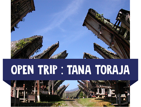 paket wisata open trip tana toraja